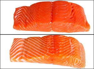 salmon ternak vs salmon liar